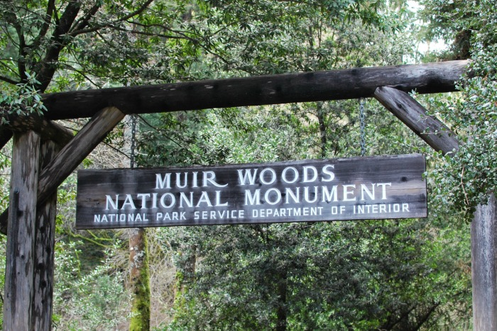 National Parks Tips for Beginners - Muir Woods National Monument
