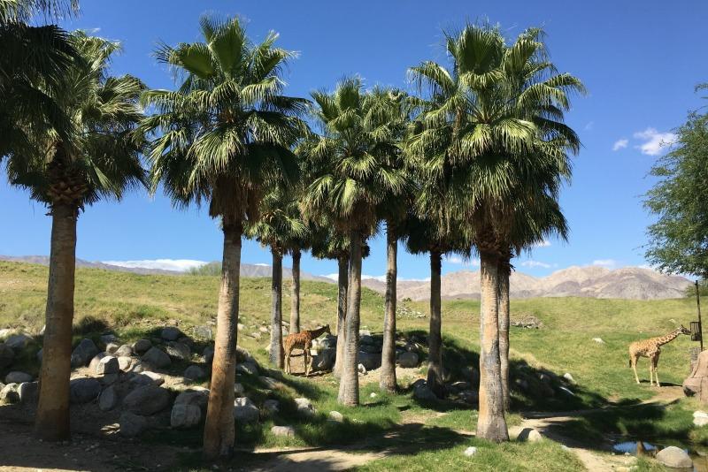Palm Springs with Kids - Living Desert Giraffes