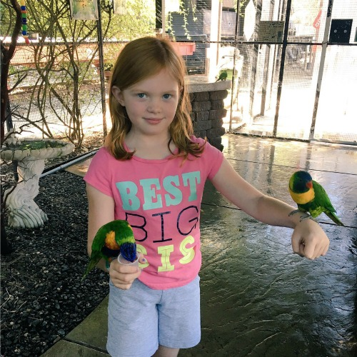 Redding California with Kids - Turtle Bay Lorikeets