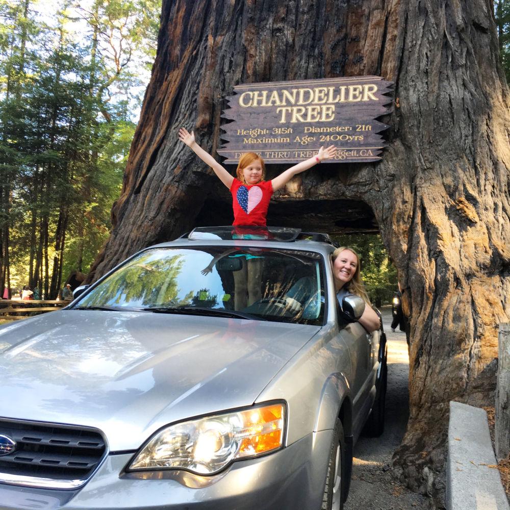 Chandelier Drive Thru Tree Leggett CA
