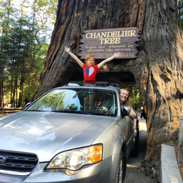 California Mendocino County with Kids - Leggett Chandelier Drive-Thru Tree