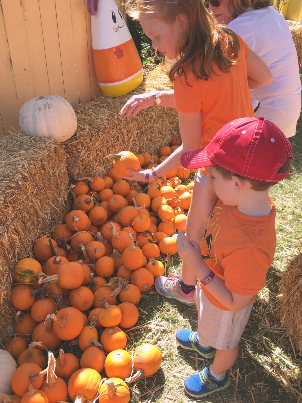 Great Pumpkin Fest Californias Great America - Pumpkin Decorating
