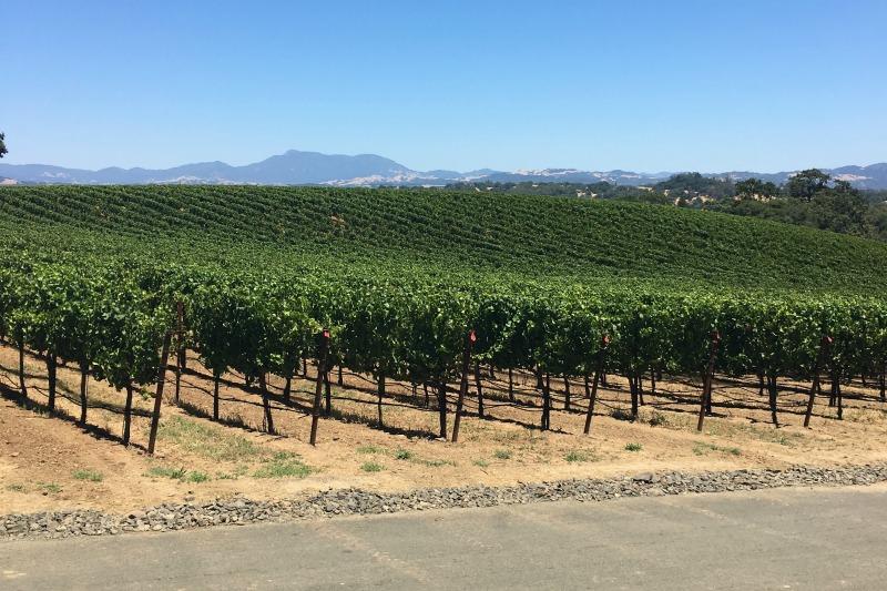 Winter Destinations in California - Napa Sonoma Wine Country