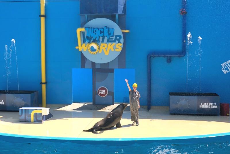 Six Flags Discovery Kingdom Tips - Sea Lion Show