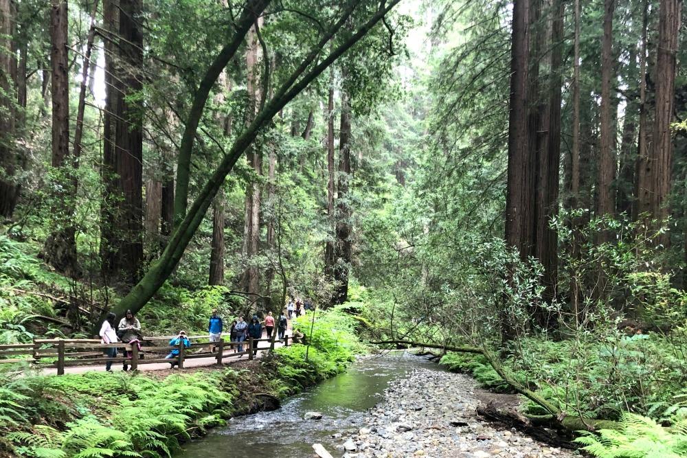 Muir Woods - Creek Path