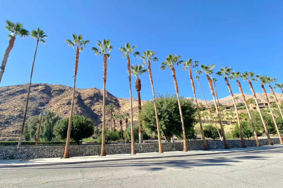 Palm Springs California Palm Trees